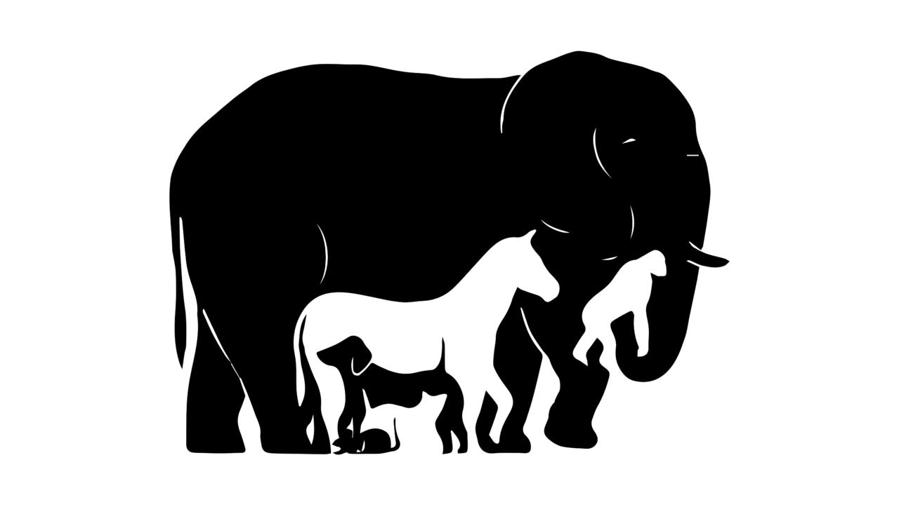 Картинка слон осел собака кошка мышь сколько животных правильный ответ